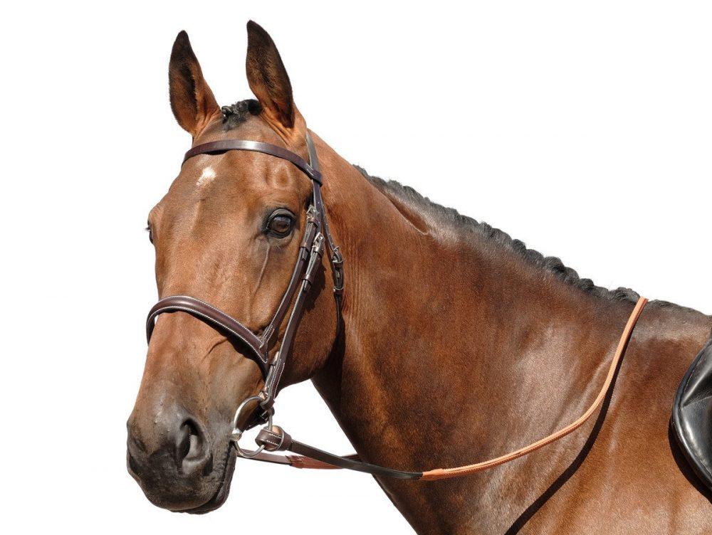 Berney looped reins